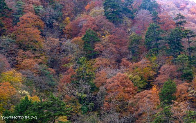 色々な色の木々。