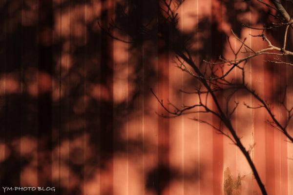 赤コンテナと影
