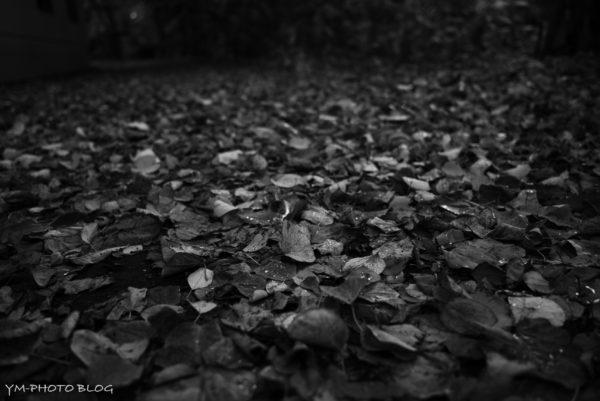 また落ち葉
